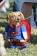 th_480587851_superdog_by_weedx_122_336lo.jpg
